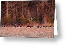 Turkey - Wild Turkey - Seventeen Longbeards Greeting Card