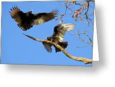 Turkey Vultures Greeting Card