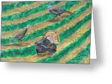 Turkeys In Field Greeting Card