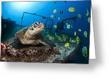 Turtle And Sealife Greeting Card