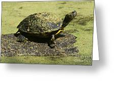 Turtle Camouflage Greeting Card