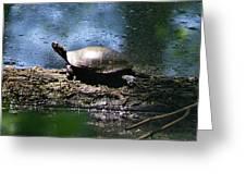 Turtle I Greeting Card