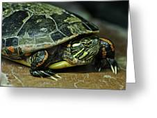 Turtle Neck Greeting Card