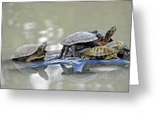 Turtle Pileup Greeting Card