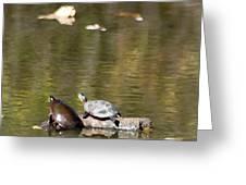 Turtle Print Greeting Card