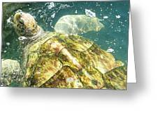 Turtle Swims Greeting Card