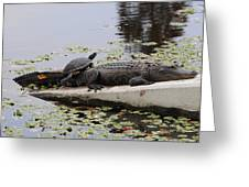 Turtle Takes A Gator Ride Greeting Card