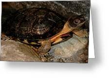 Turtle Time On The Rocks Greeting Card