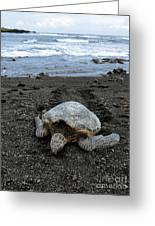 Turtle Tracks Greeting Card by David Taylor