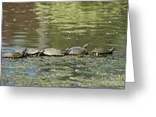 Turtle Traffic Jam Greeting Card
