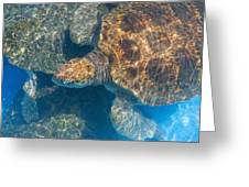Turtle Underwater,high Angle View Greeting Card
