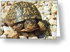 Turtle With Red Eyes On Rocks Greeting Card