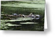 Turtles On Log Scarboro Pond#1  Greeting Card