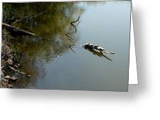 Turtles On The Pond Greeting Card