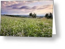 Tuscany Flowers Greeting Card
