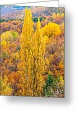 Tuscany Landscape  Greeting Card
