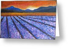 Tuscany Lavender Field Greeting Card