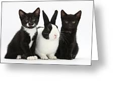 Tuxedo Kittens With Dutch Rabbit Greeting Card