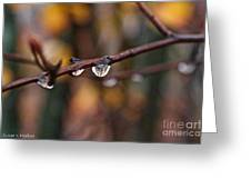 Twig Greeting Card