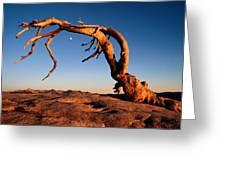 Twilight View Of A Jeffrey Pine Tree Greeting Card