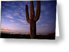 Twilight View Of A Saguaro Cactus Greeting Card