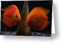 Twin Friends Malboro Fish  Greeting Card