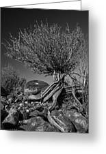 Twisted Beauty - Bw Greeting Card