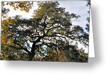 Twisted Oak Greeting Card