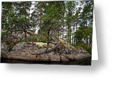 Twisted Pine Greeting Card