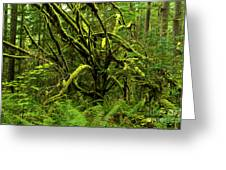 Twisted Rain Forest Greeting Card