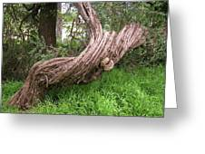 Twisted Tree 1123 Greeting Card