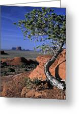 Twisted Tree Monument Valley Greeting Card