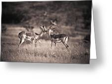 Two Antelopes Together In A Field Greeting Card
