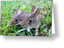 Two Baby Bunnies Greeting Card