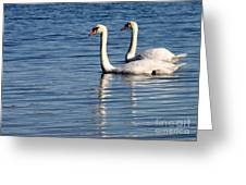 Two Beautiful Swans Greeting Card by Sabrina L Ryan
