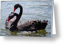 Two Black Swans Greeting Card