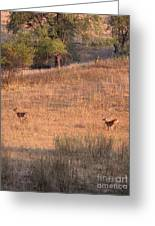 Two Bucks On The Run Greeting Card