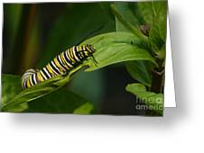 Two Caterpillars Greeting Card