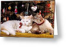 Two Cats At Christmas Greeting Card
