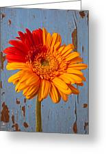 Two Color Gerbera Daisy Greeting Card