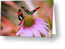 Two Colorful Butterflies On Cone Flower Greeting Card
