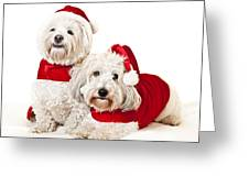 Two Cute Dogs In Santa Outfits Greeting Card