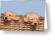 Two Cute Puppies Asleep In Basket Greeting Card