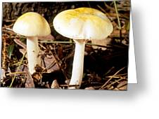 Two Death Cap Mushrooms Greeting Card