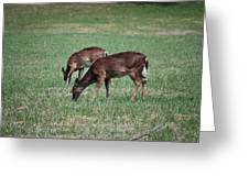 Two Does Grazing Greeting Card