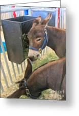 Two Donkeys Eating Greeting Card by Donna Munro
