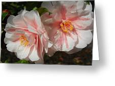 Two Flowers Greeting Card