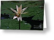 Two Frogs Sharing A Lotus Greeting Card