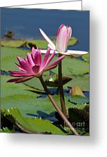 Two Graceful Water Lilies Greeting Card by Sabrina L Ryan