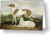 Two Greyhounds In A Landscape Greeting Card
